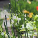 2019/5/24 庭の草花
